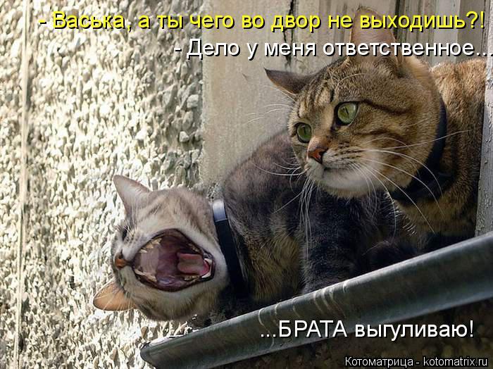 Котоматрица: - Васька, а ты чего во двор не выходишь?! - Дело у меня ответственное... ...БРАТА выгуливаю!