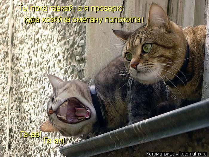 Котоматрица: куда хозяйка сметану положила Ты пока гавкай, а я проверю ! Га-ав! Га-ав!