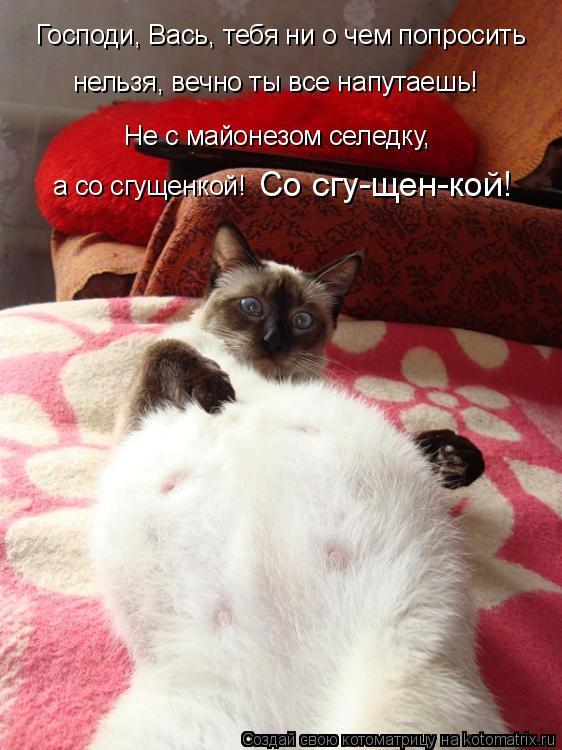 Котоматрица: Господи, Вась, тебя ни о чем попросить нельзя, вечно ты все напутаешь! Не с майонезом селедку, а со сгущенкой! Со сгу-щен-кой!