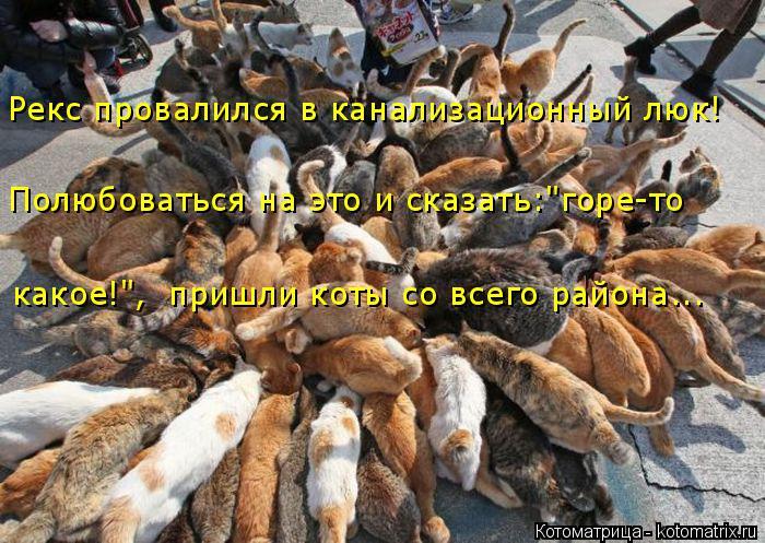 """Котоматрица: Полюбоваться на это и сказать:""""горе-то  Рекс провалился в канализационный люк! какое!"""",  пришли коты со всего района..."""