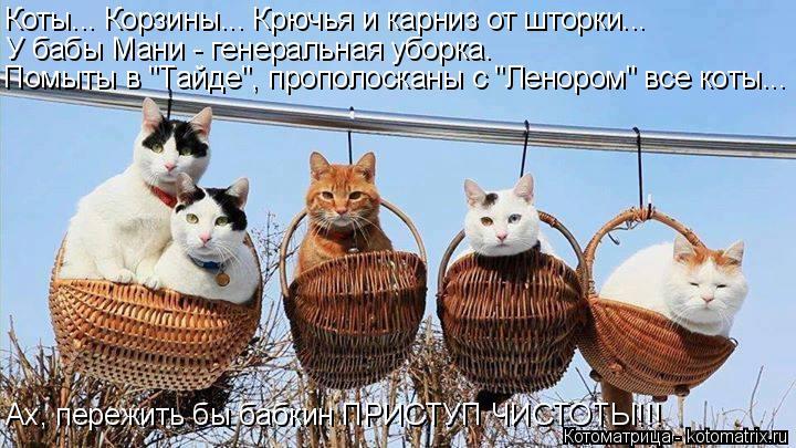 """Котоматрица: Коты... Корзины... Крючья и карниз от шторки... У бабы Мани - генеральная уборка. Помыты в """"Тайде"""", прополосканы с """"Ленором"""" все коты...    Ах, пережи"""