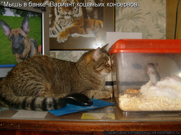 """Котоматрица: """"Мышь в банке"""".Вариант кошачьих консервов."""