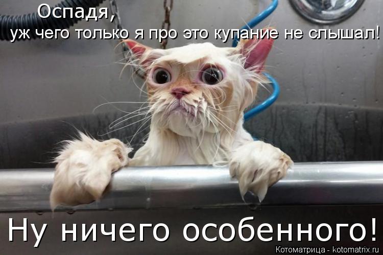 Котоматрица: Оспадя,  уж чего только я про это купание не слышал! Ну ничего особенного!