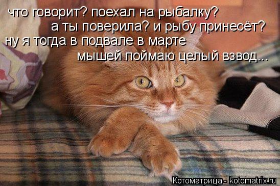 Котоматрица: что говорит? поехал на рыбалку? а ты поверила? и рыбу принесёт? ну я тогда в подвале в марте   мышей поймаю целый взвод...
