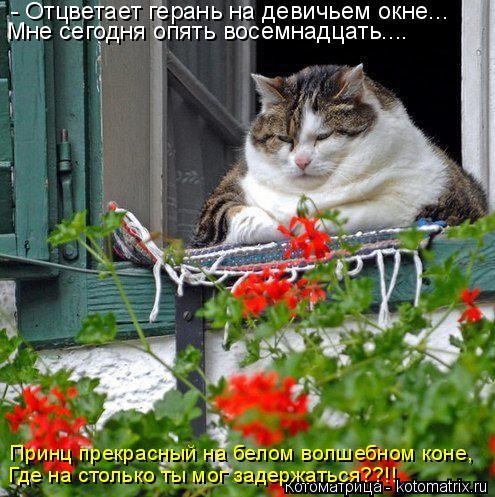 Котоматрица: - Отцветает герань на девичьем окне... Мне сегодня опять восемнадцать.... Принц прекрасный на белом волшебном коне, Где на столько ты мог заде