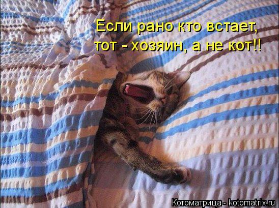 Котоматрица: Если рано кто встает, тот - хозяин, а не кот!!