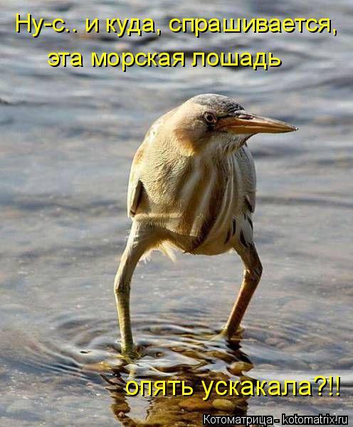 Котоматрица: Ну-с.. и куда, спрашивается,  эта морская лошадь опять ускакала?!!