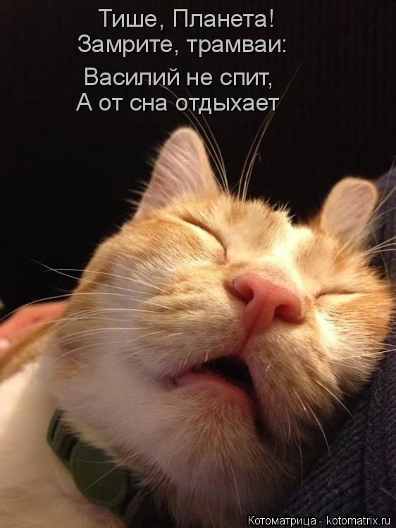 Котоматрица: Тише, Планета! Замрите, трамваи: Василий не спит, А от сна отдыхает
