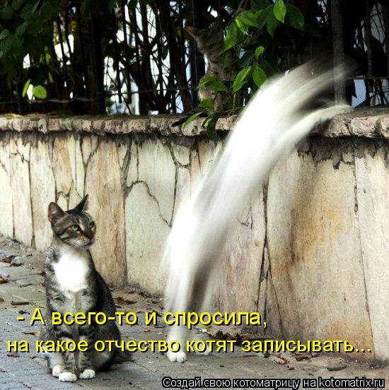 Котоматрица: - А всего-то и спросила,  на какое отчество котят записывать...