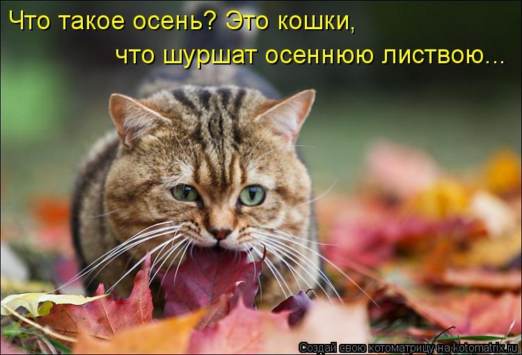 Котоматрица: Что такое осень? Это кошки, что шуршат осеннюю листвою...