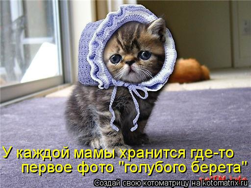 """Котоматрица: первое фото """"голубого берета"""" У каждой мамы хранится где-то"""