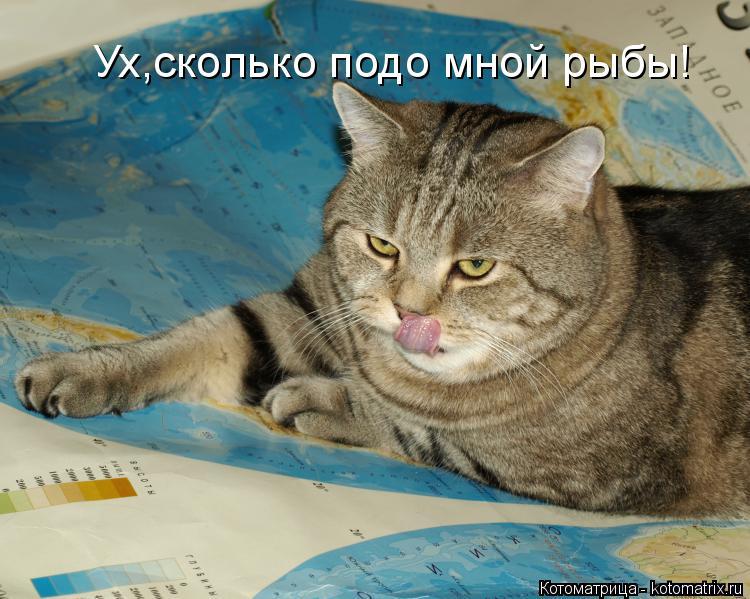 Котоматрица: Ух,сколько подо мной рыбы!