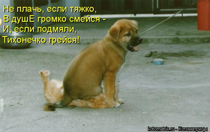 Котоматрица: Не плачь, если тяжко, В душЕ громко смейся -  И, если подмяли, Тихонечко грейся!