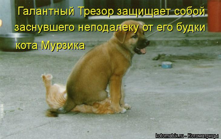 Котоматрица: Галантный Трезор защищает собой заснувшего неподалеку от его будки кота Мурзика