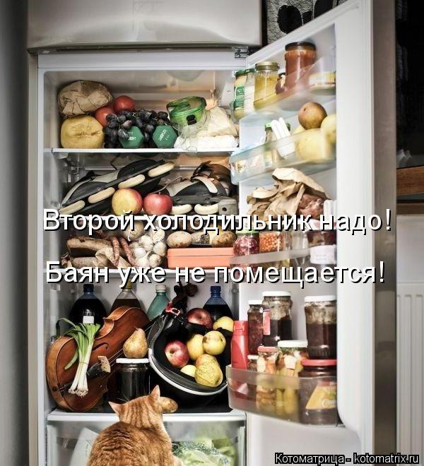 Котоматрица: Второй холодильник надо! Баян уже не помещается!