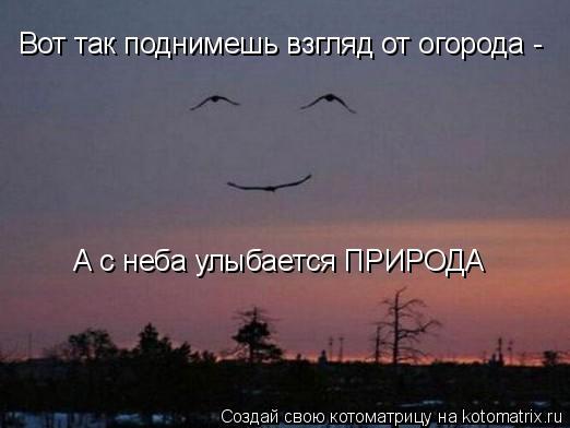 Котоматрица: Вот так поднимешь взгляд от огорода - А с неба улыбается ПРИРОДА