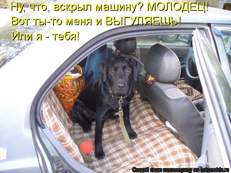 Котоматрица: - Ну, что, вскрыл машину? МОЛОДЕЦ! Вот ты-то меня и ВЫГУЛЯЕШЬ! Или я - тебя!