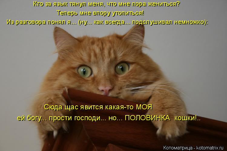 Котоматрица: Сюда щас явится какая-то МОЯ ей богу... прости господи... но... ПОЛОВИНКА  кошки!.. Из разговора понял я... (ну... как всегда... подслушивал немножко)
