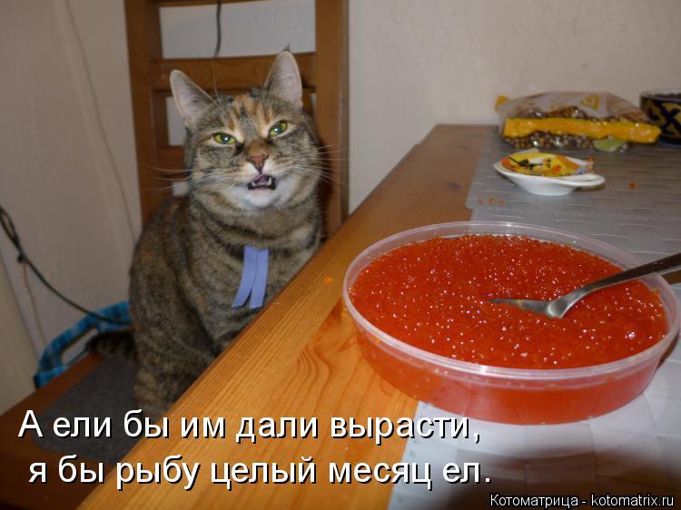 Котоматрица: А ели бы им дали вырасти, я бы рыбу целый месяц ел.