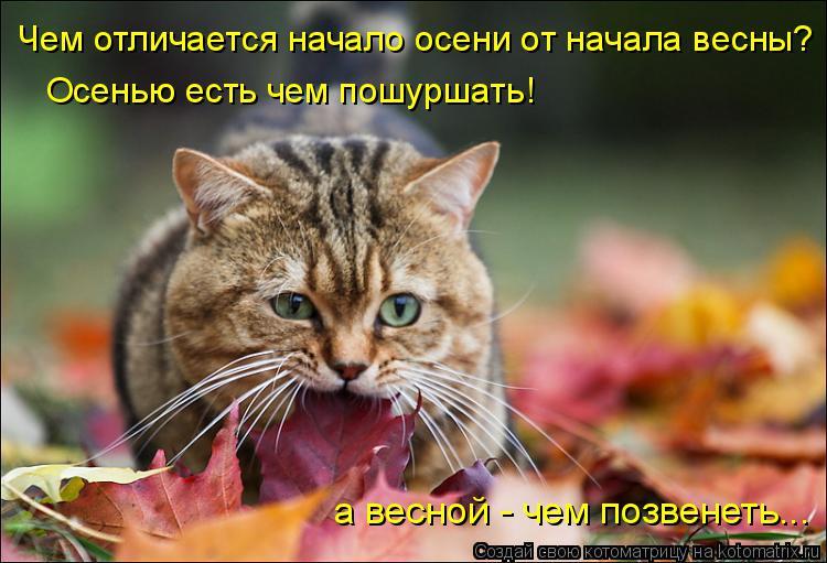 Котоматрица: Чем отличается начало осени от начала весны? Осенью есть чем пошуршать! а весной - чем позвенеть...