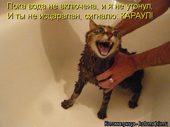 Котоматрица: Пока вода не включена, и я не утонул, И ты не исцарапан, сигналю: КАРАУЛ!