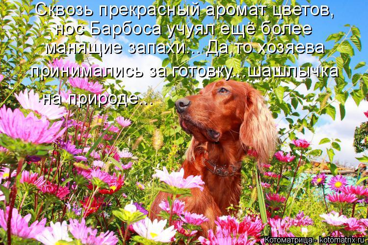 Котоматрица: Сквозь прекрасный аромат цветов, нос Барбоса учуял ещё более манящие запахи... Да,то хозяева принимались за готовку...шашлычка на природе...