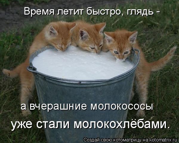 Котоматрица: Время летит быстро, глядь - уже стали молокохлебами. а вчерашние молокососы ..