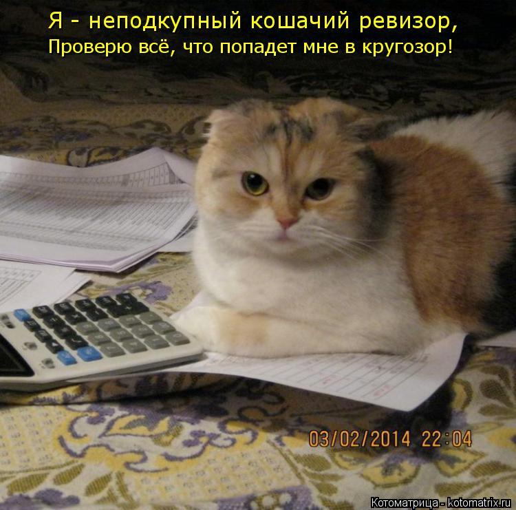 Котоматрица: Я - неподкупный кошачий ревизор, Проверю всё, что попадет мне в кругозор!