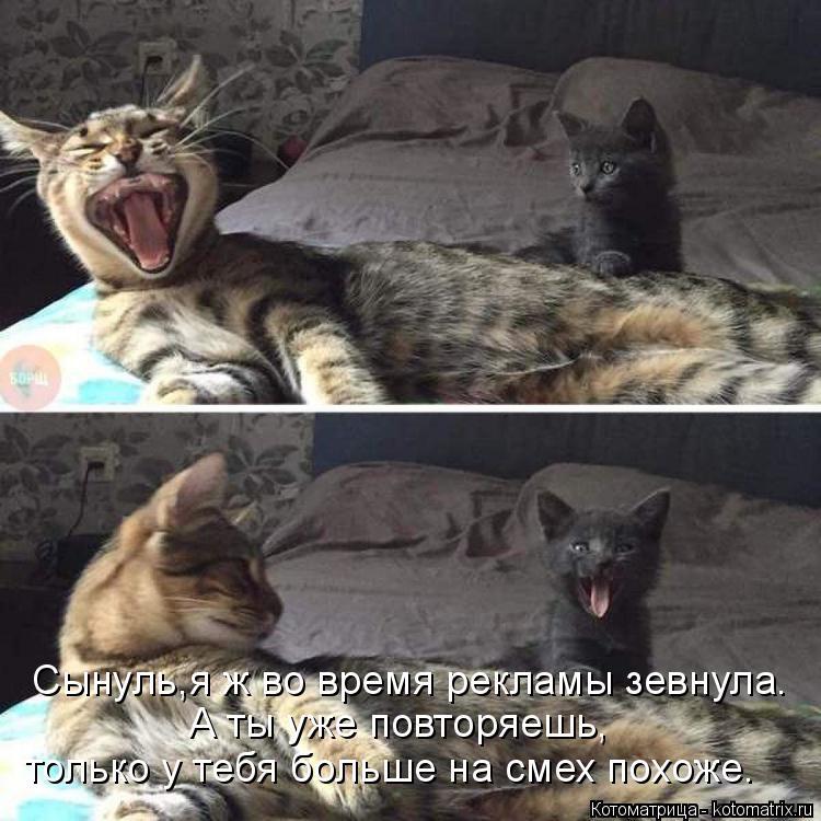 Котоматрица: Сынуль,я ж во время рекламы зевнула. А ты уже повторяешь, только у тебя больше на смех похоже.