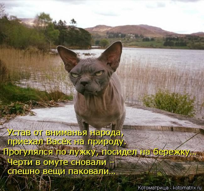 Котоматрица: Устав от вниманья народа,  приехал Васёк на природу. Прогулялся по лужку, посидел на бережку… Черти в омуте сновали –  спешно вещи паковали