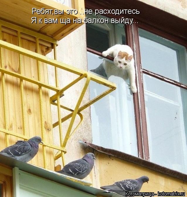 Котоматрица: Ребят,вы это ..не расходитесь Я к вам ща на балкон выйду...
