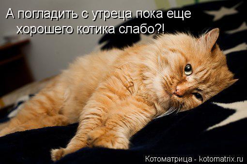 Котоматрица: А погладить с утреца пока еще  хорошего котика слабо?!