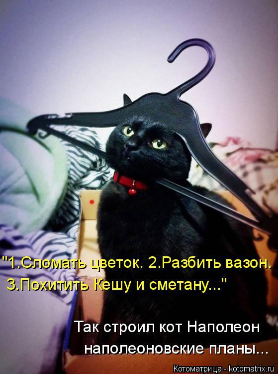 """Котоматрица: """"1.Сломать цветок. 2.Разбить вазон. 3.Похитить Кешу и сметану..."""" Так строил кот Наполеон наполеоновские планы..."""