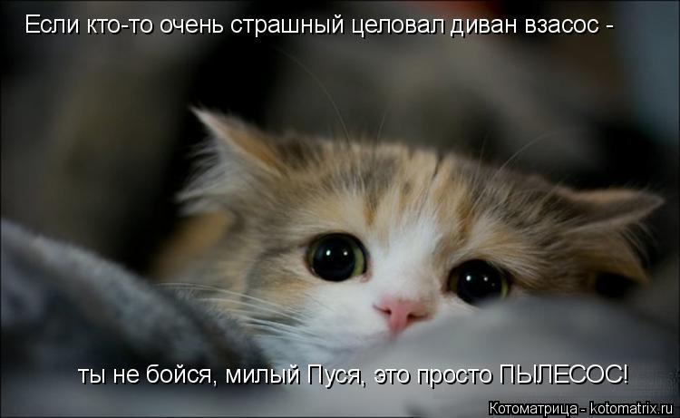 Котоматрица: Если кто-то очень страшный целовал диван взасос -  ты не бойся, милый Пуся, это просто ПЫЛЕСОС!