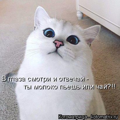 Котоматрица: В глаза смотри и отвечай - ты молоко пьешь или чай?!!
