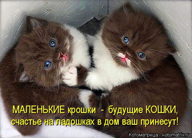Котоматрица: МАЛЕНЬКИЕ крошки  -  будущие КОШКИ, счастье на ладошках в дом ваш принесут!