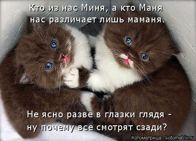 Котоматрица: Кто из нас Миня, а кто Маня нас различает лишь маманя. Не ясно разве в глазки глядя -  ну почему все смотрят сзади?