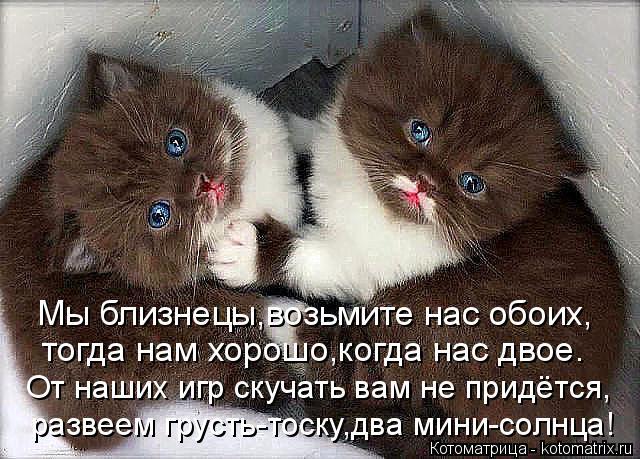 Котоматрица: Мы близнецы,возьмите нас обоих, От наших игр скучать вам не придётся, тогда нам хорошо,когда нас двое. развеем грусть-тоску,два мини-солнца!