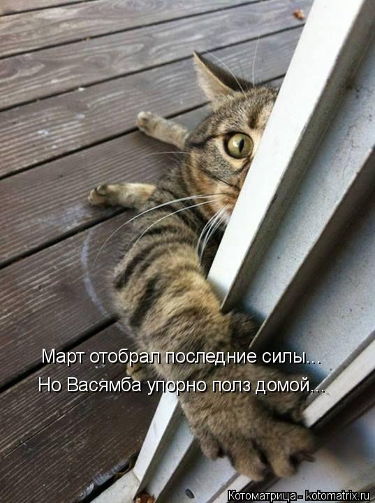 Котоматрица: Март отобрал последние силы... Но Васямба упорно полз домой...