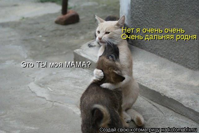 Котоматрица: Нет я очень очень Очень дальняя родня Это ТЫ моя МАМА?