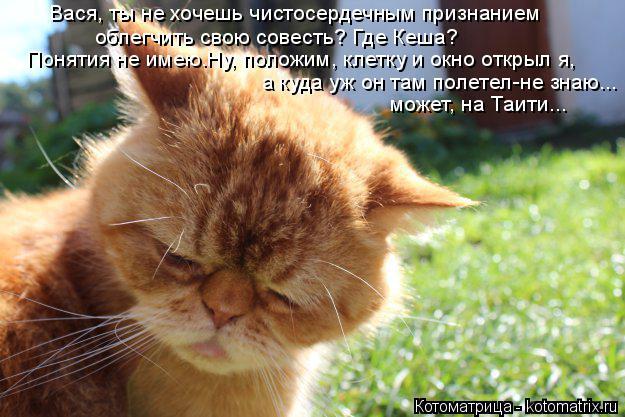 Котоматрица: Вася, ты не хочешь чистосердечным признанием  облегчить свою совесть? Где Кеша? Понятия не имею.Ну, положим, клетку и окно открыл я, а куда уж