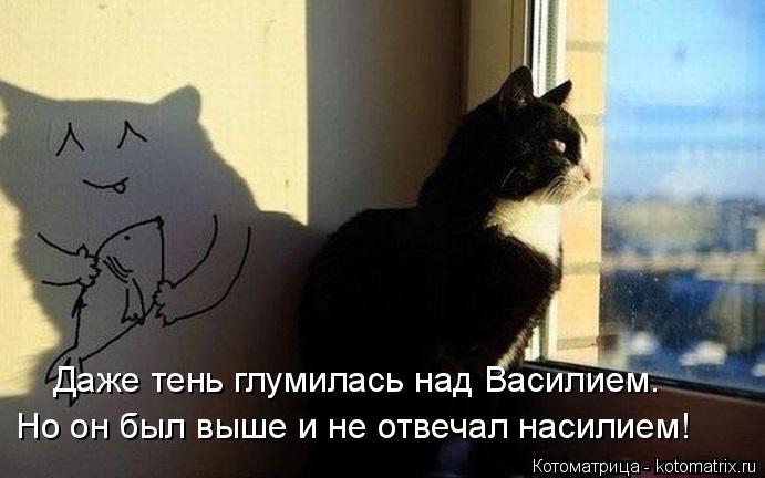 Котоматрица: Даже тень глумилась над Василием. Но он был выше и не отвечал насилием!