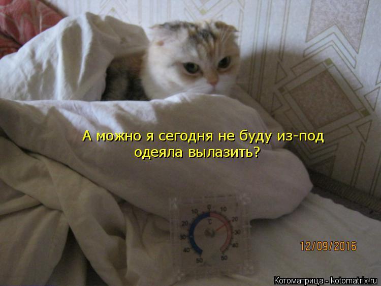 Котоматрица: А можно я сегодня не буду из-под одеяла вылазить?