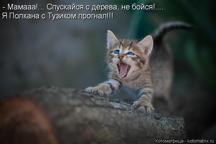 Котоматрица: - Мамааа!... Спускайся с дерева, не бойся!.... Я Полкана с Тузиком прогнал!!!