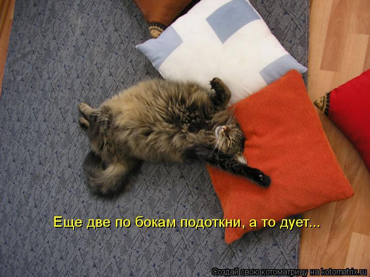Котоматрица: Еще две по бокам подоткни, а то дует...