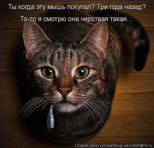 Котоматрица: Ты когда эту мышь покупал? Три года назад? То-то я смотрю она черствая такая...