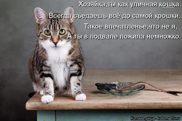 Котоматрица: Всегда съедаешь всё до самой крошки. Такое впечатленье,что не я, А ты в подвале пожила немножко. Хозяйка,ты как уличная кошка.