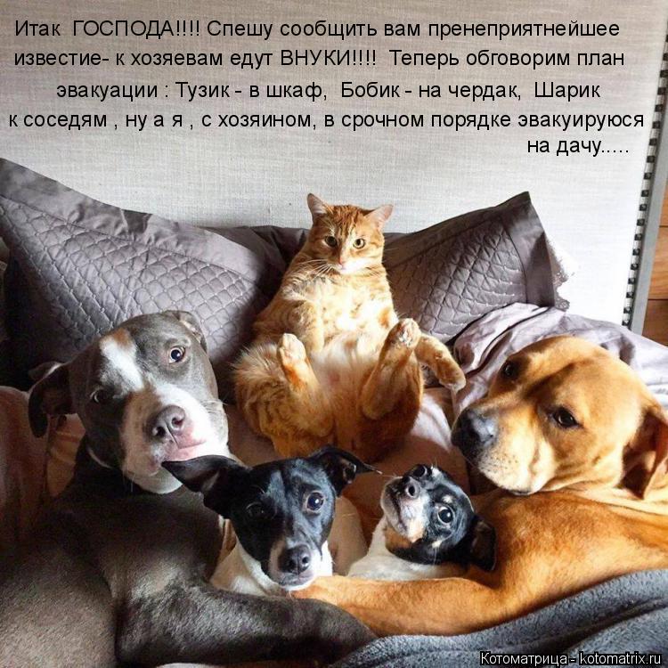 Котоматрица: Итак  ГОСПОДА!!!! Спешу сообщить вам пренеприятнейшее известие- к хозяевам едут ВНУКИ!!!!  Теперь обговорим план  эвакуации : Тузик - в шкаф,  Бо