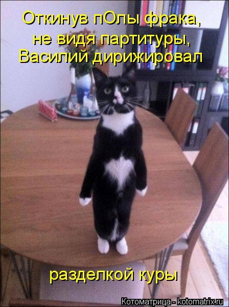 Котоматрица: Откинув пОлы фрака, Василий дирижировал разделкой куры не видя партитуры,