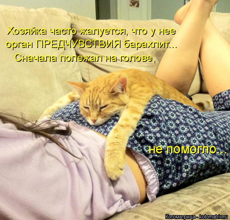 Котоматрица: Хозяйка часто жалуется, что у нее орган ПРЕДЧУВСТВИЯ барахлит...  Сначала полежал на голове, не помогло...